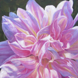 """Morning LIght""  (Dahlia)"