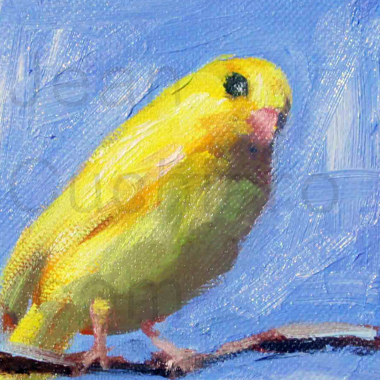 """Yellow Parakeet"""