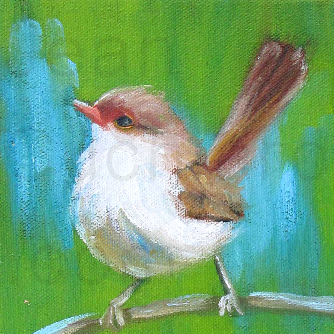 """Green Fairy Wren"""