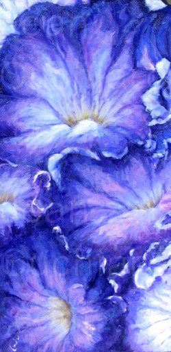 """Purple Petunia"""