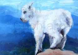 """Baby Mountain Goat 1"""
