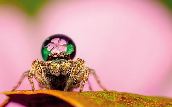 Araña - macrofotografía