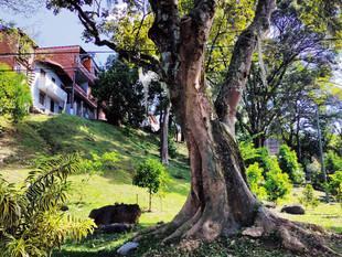 Medellín iniciará el plan de reverdecimiento hasta el año 2030 como referente internacional