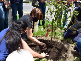 Comienza la siembra de 240 árboles por el intercambio vial de Colombia con la 80