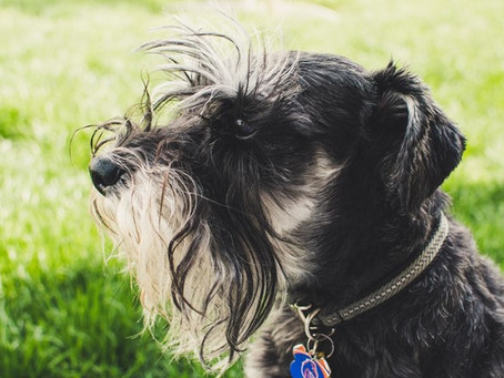 Simple Ways to Foster Your Aging Pet's Health and Happiness
