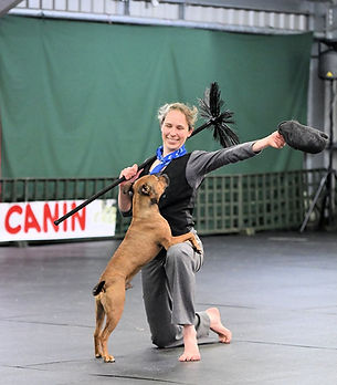 Doggy Heelwork to Music competition shot
