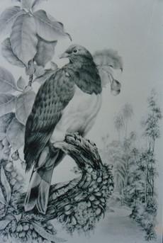Woodpigeon w Puriri Tree