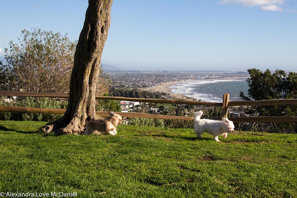 Ventura's Serra Cross Park