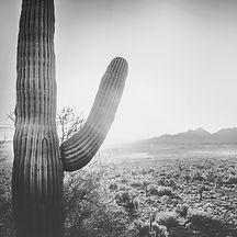 Desert%20Cactus%20Landscape_edited.jpg