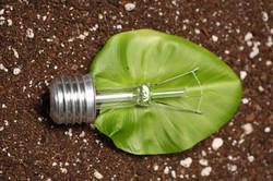 Biomasa-luz-830x553