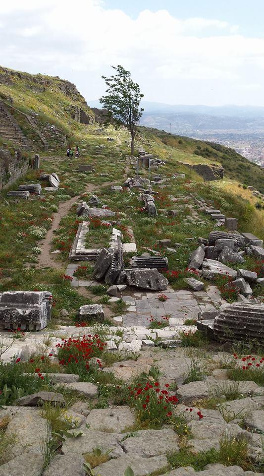Pergamon28