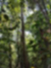 Jungle19.jpg