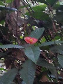 JungleFlower.jpg