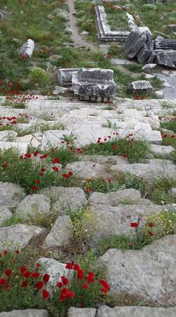 Pergamon29
