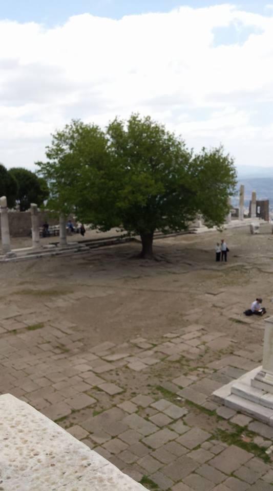 Pergamon5