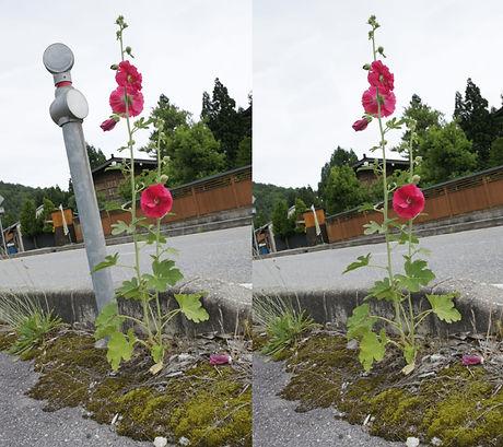 道路わきの花.jpg