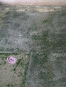 人工芝のり除去 施工前の床面の様子