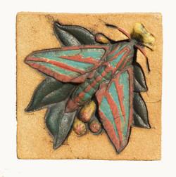 Elephant Hawk Moth jpg