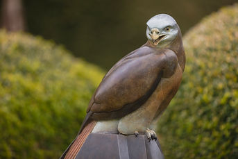Bronze Red Kite at Fresh Air Sculpture Show. .J