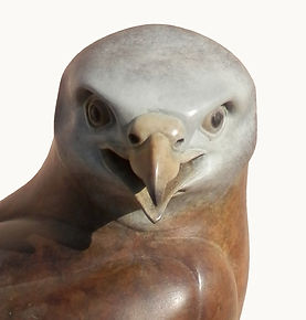 Close up view of the head of a female Red Kite in patinated foundry bronze by west country sculptor Ama Menec