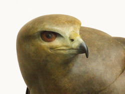 Buzzard (detail)