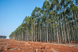 Tree Cultivation