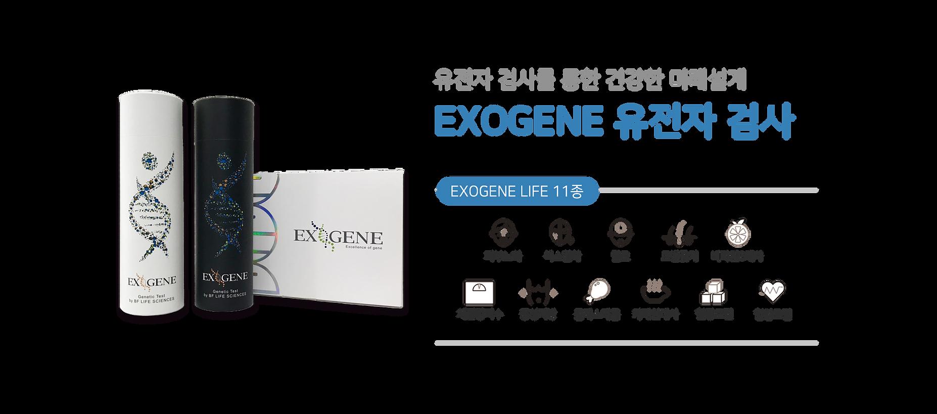 유전자배경_KO.png