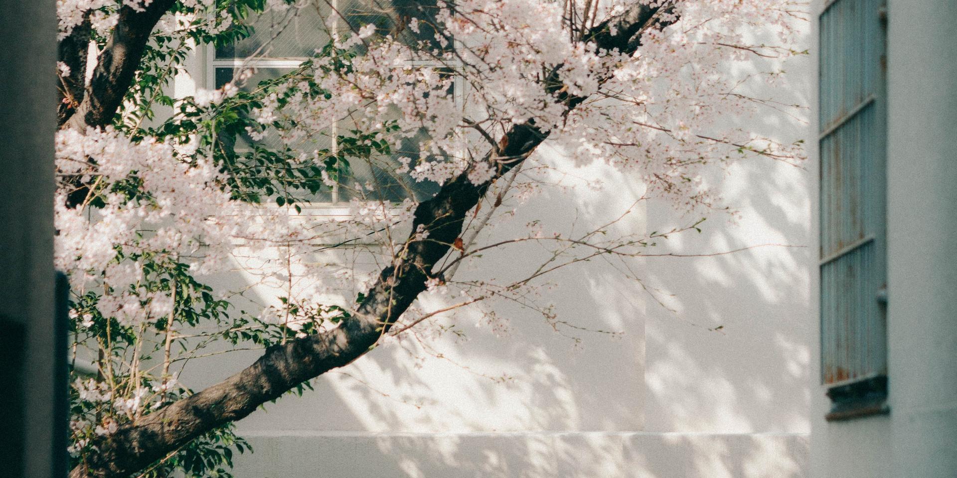 kenjiportrait2.jpg