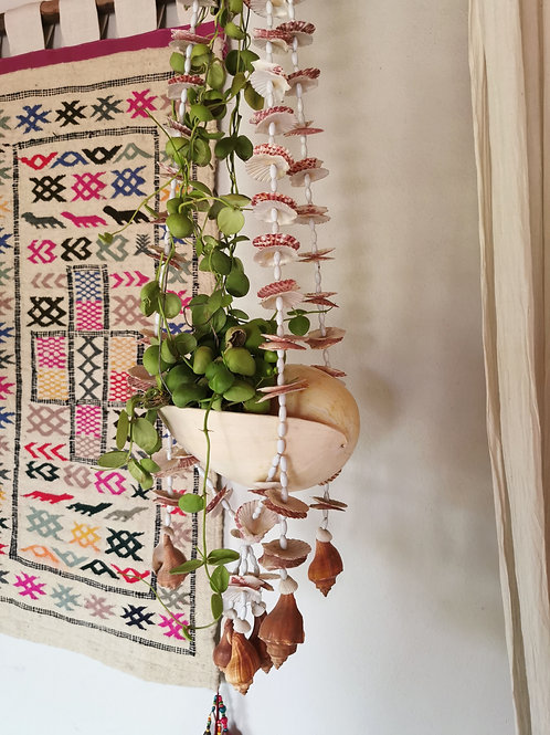 Large Cone Shell Hanging Planter