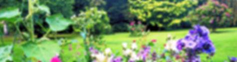 viele blühende Pflanzen. im Hintergrundblühende Ziersträucher und Rasenfläche