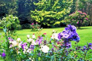 weiträumiger Garten mit blüheden Blumen und blühenden Sträuchern und Rasenfläche