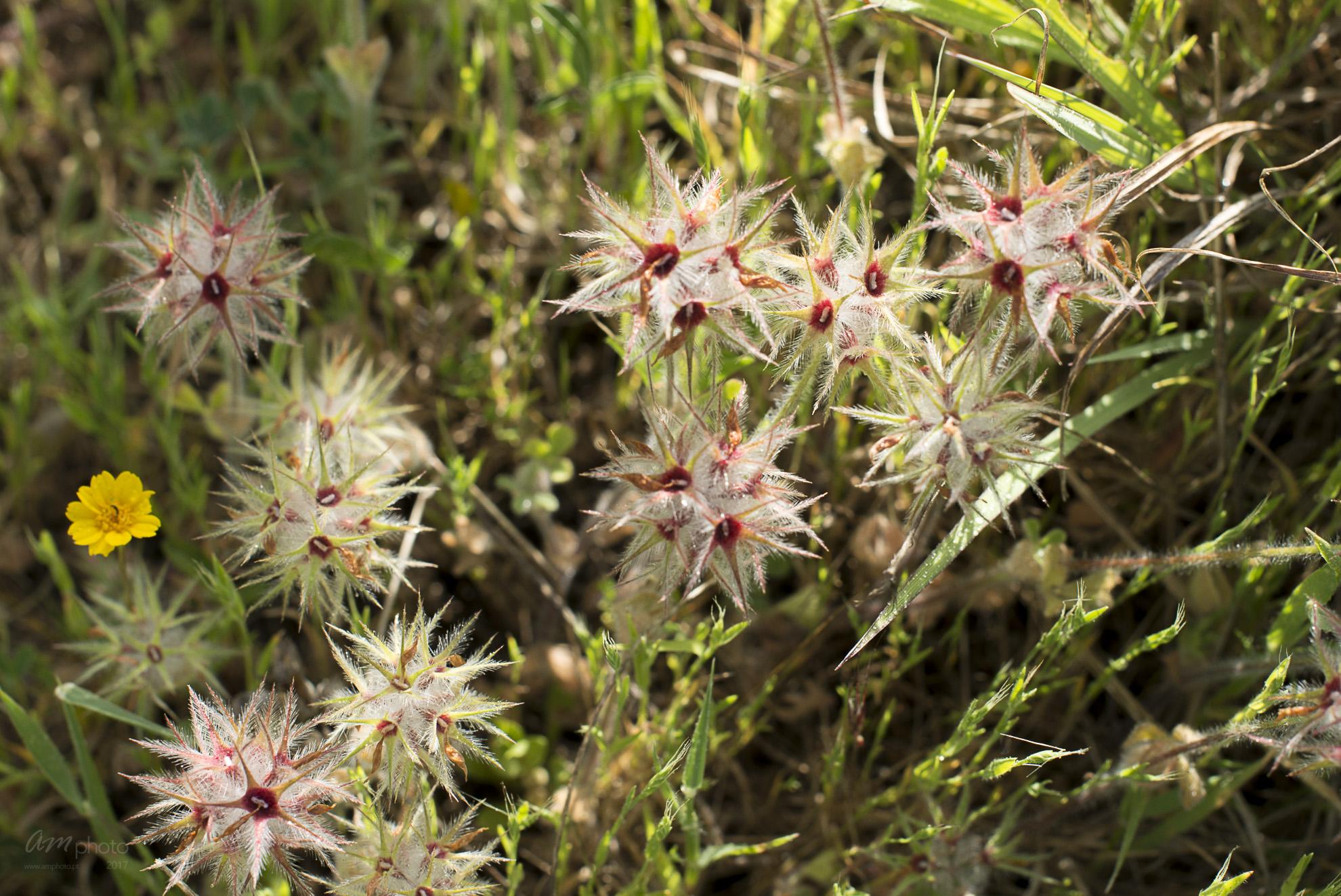 Wild Flowers-189