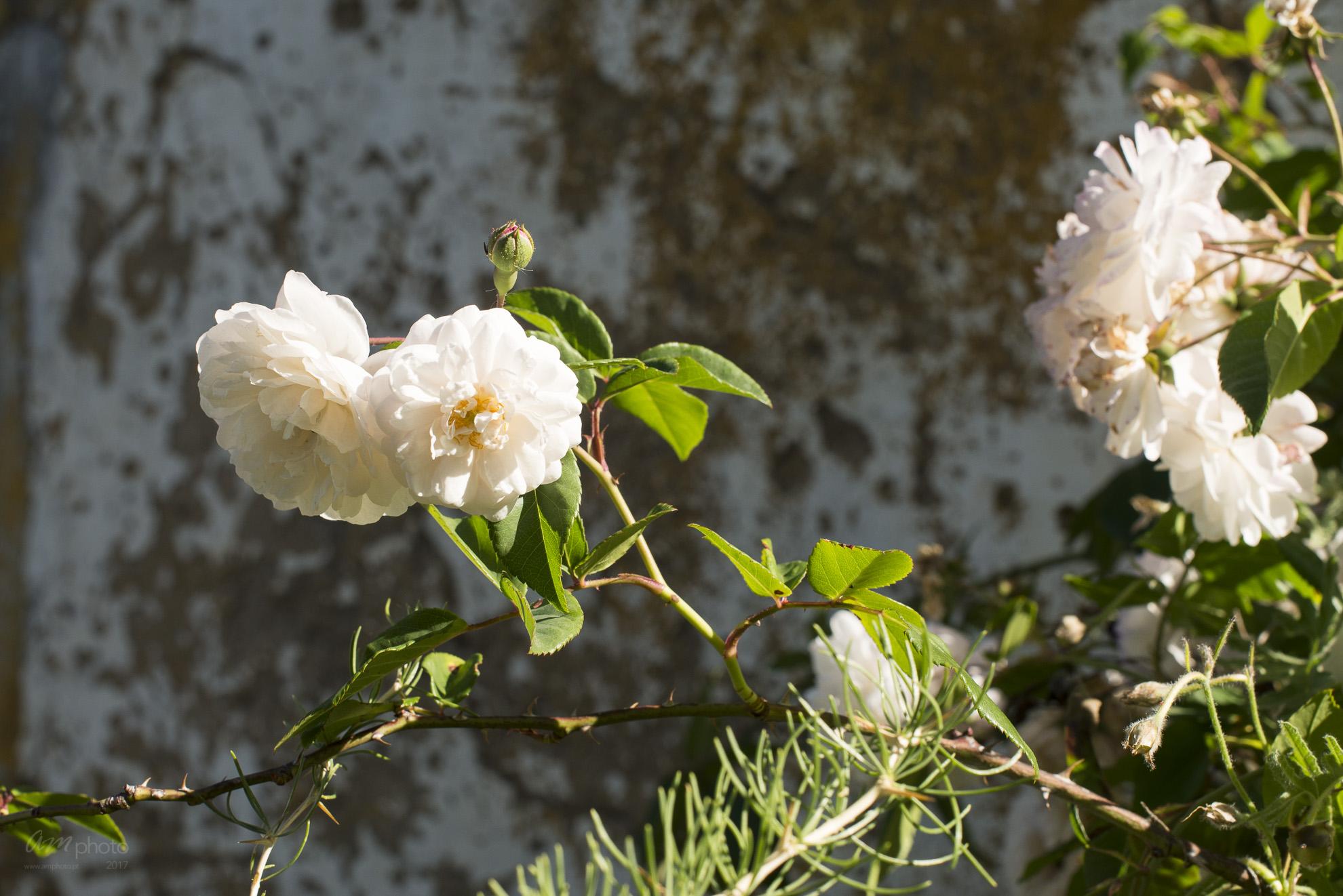 Wild Flowers-34