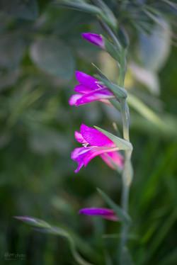 Wild Flowers-389