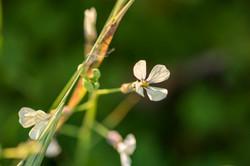 Wild Flowers-623