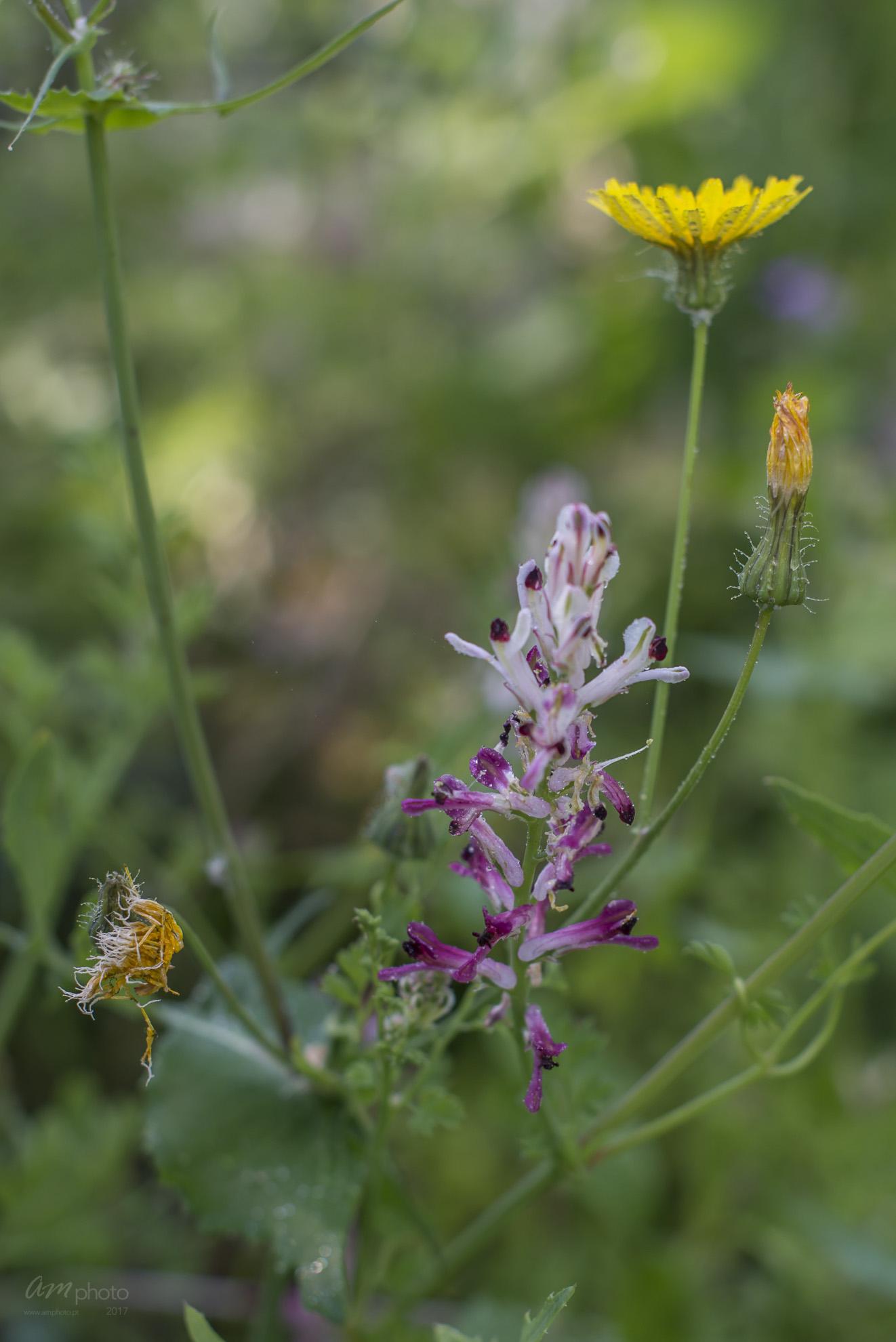 Wild Flowers-408