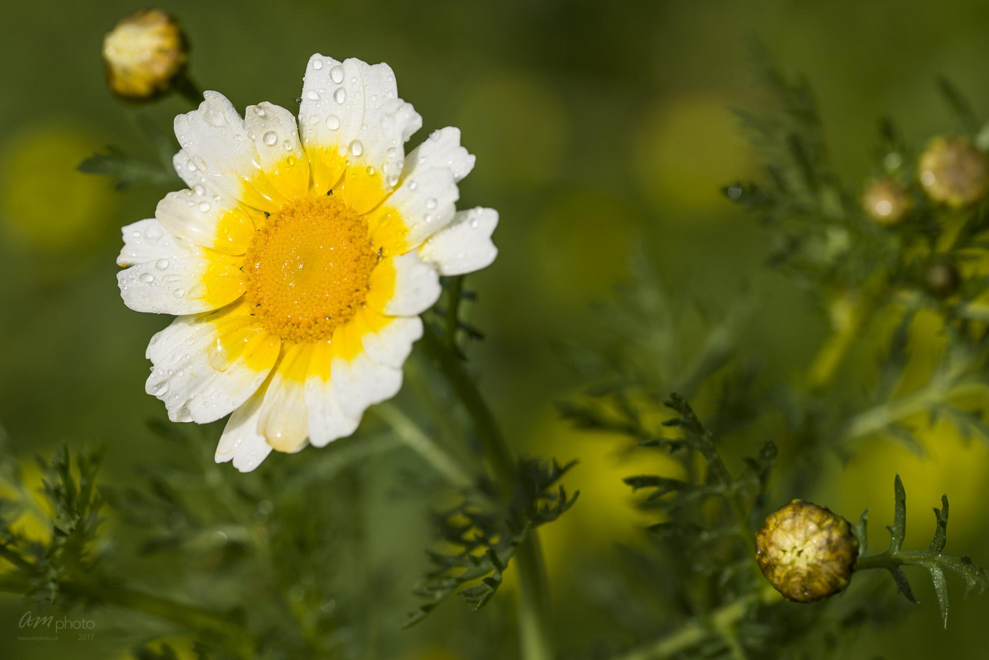 Wild Flowers-505