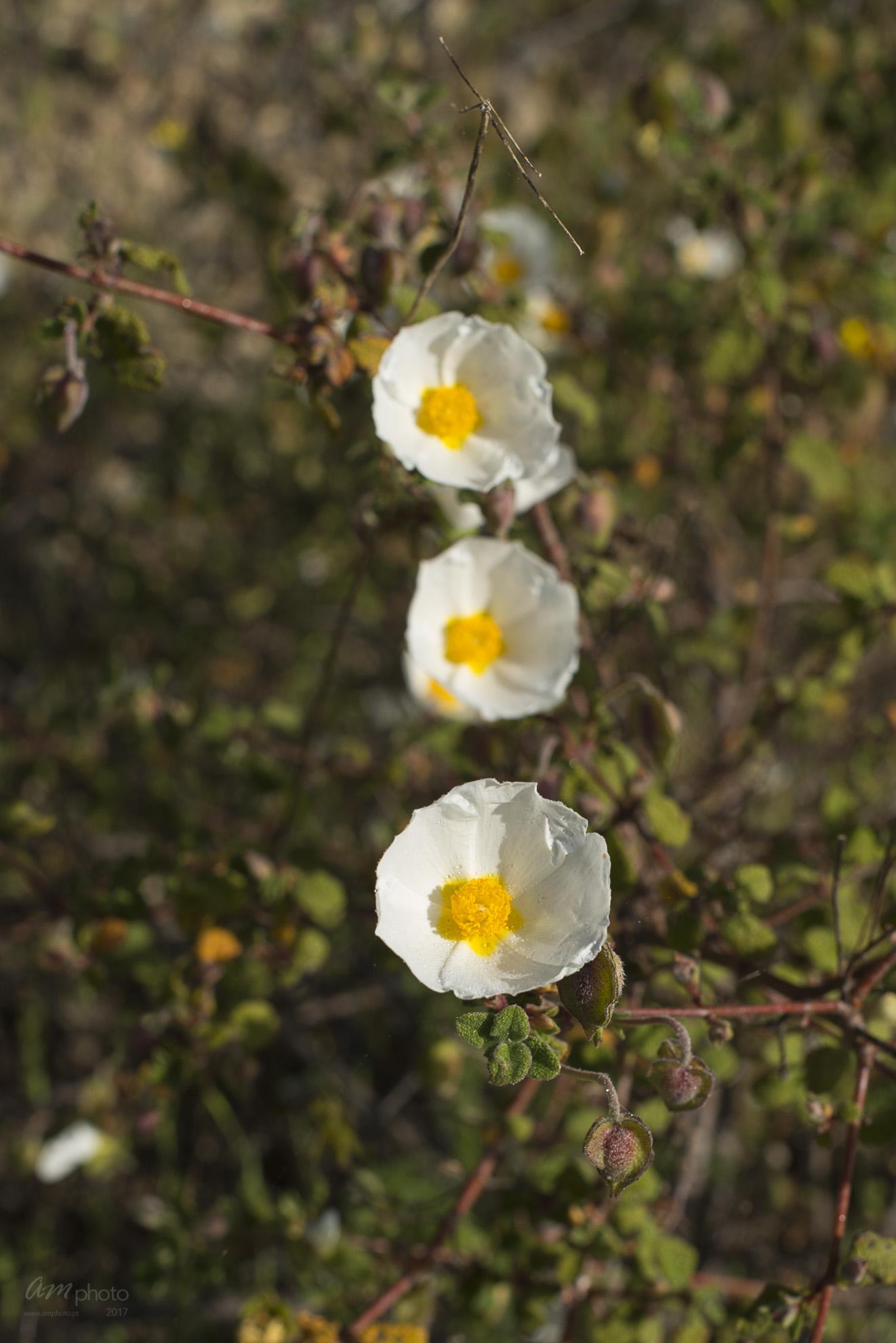 Wild Flowers-192