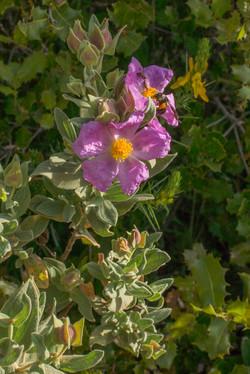 Wild Flowers-117