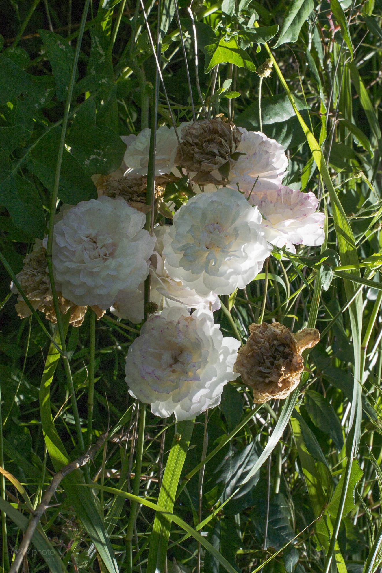 Wild Flowers-31