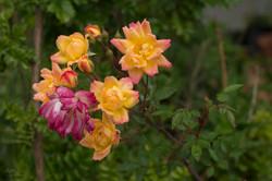 Wild Flowers-49