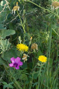 Wild Flowers-280