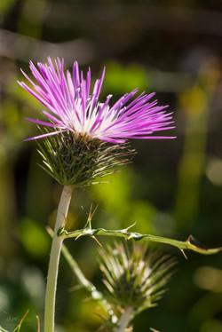 Wild Flowers-598