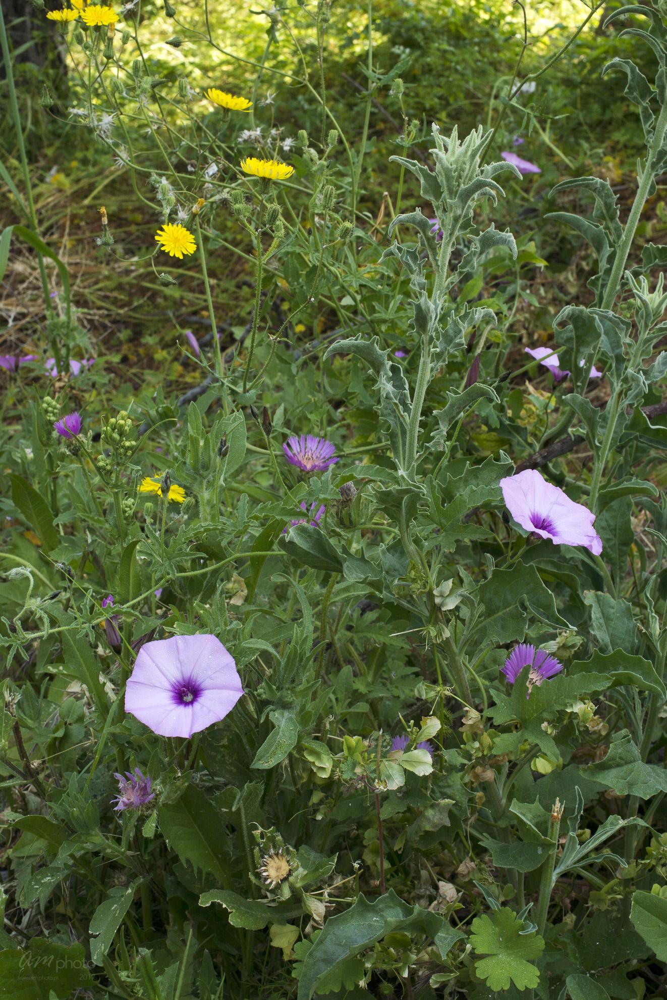 Wild Flowers-221