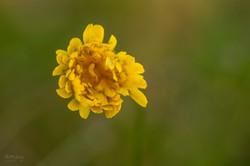 Wild Flowers-637