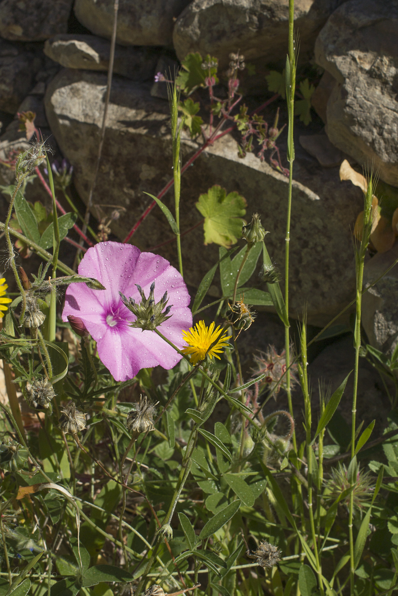 Wild Flowers-205