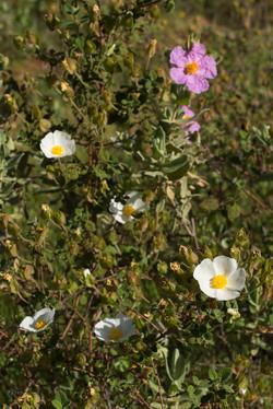 Wild Flowers-199