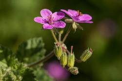 Wild Flowers-659
