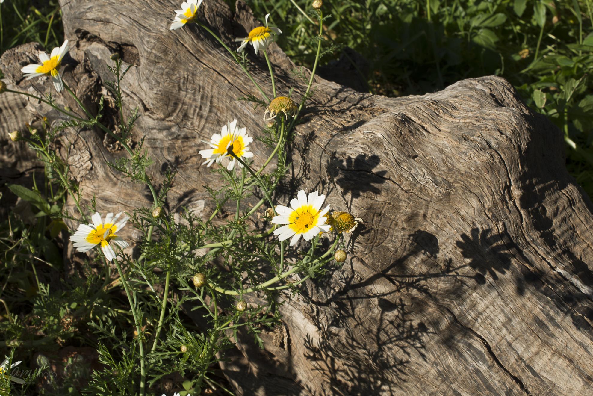 Wild Flowers-271