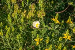 Wild Flowers-114